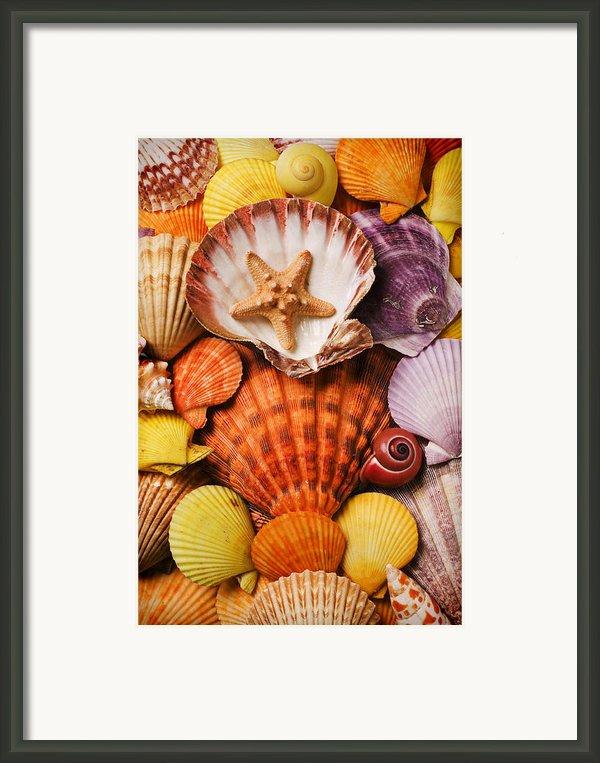 Pile Of Seashells Framed Print By Garry Gay