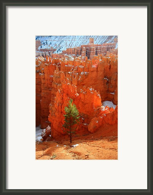 Pine Hoodoos At Bryce Canyon Framed Print By Pierre Leclerc