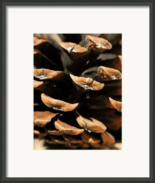 Pinecone Framed Print By The Forests Edge Photography - Diane Sandoval