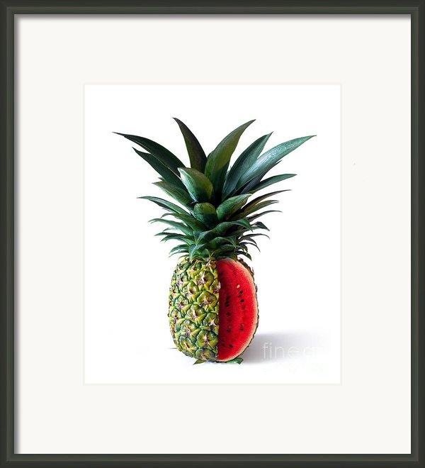 Pinemelon 2 Framed Print By Carlos Caetano