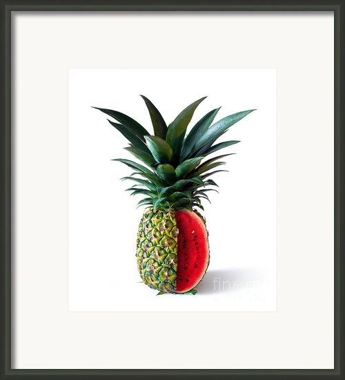 Pinemelon 2 Framed Print By Carlos Caetano