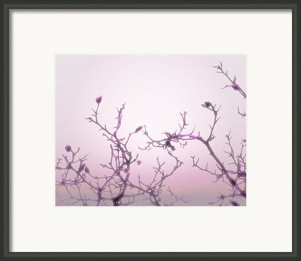 Pink Dawn Framed Print By Ann Powell