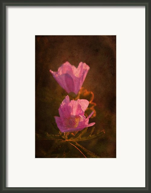 Pink Delight Framed Print By Aimelle
