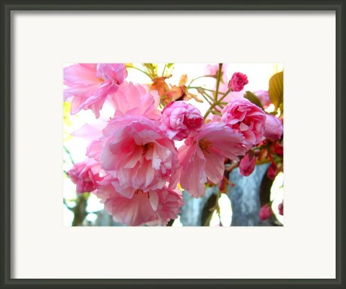 Pink Flowers Framed Print By D R Teest
