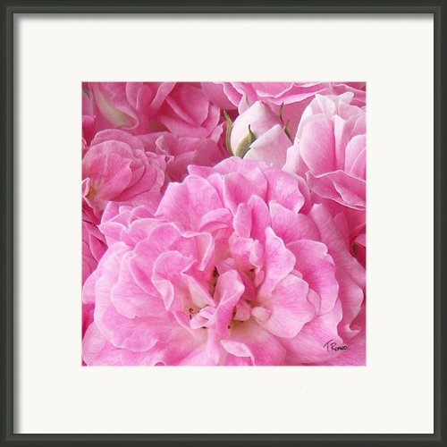 Pink Framed Print By Tom Romeo