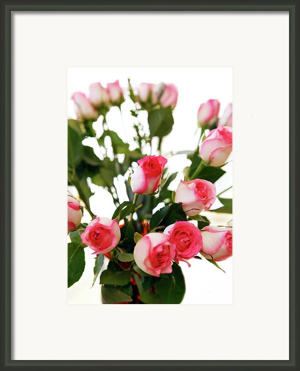 Pink Trimmed Roses Framed Print By Marilyn Hunt