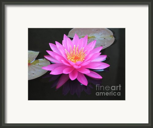 Pink Waterlily Framed Print By Eva Kaufman