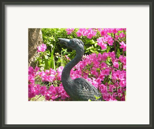 Pinkness Of A Bird Framed Print By Kimberlee Weisker