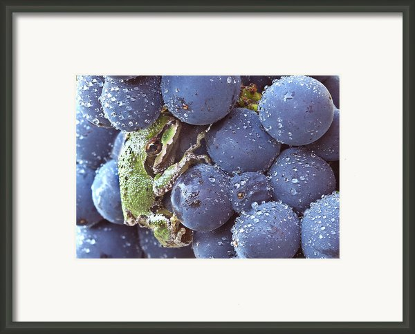 Pinot Hitchhiker Framed Print By Jean Noren
