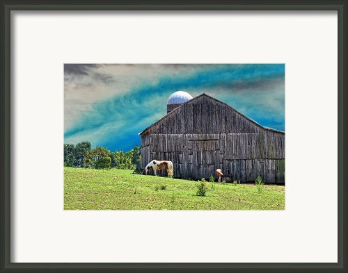 Pinto Summer Framed Print By Jan Amiss Photography