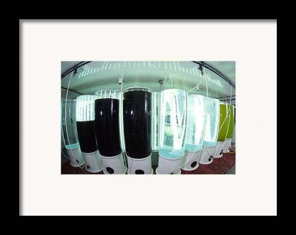 Plankton Research Framed Print By Alexis Rosenfeld