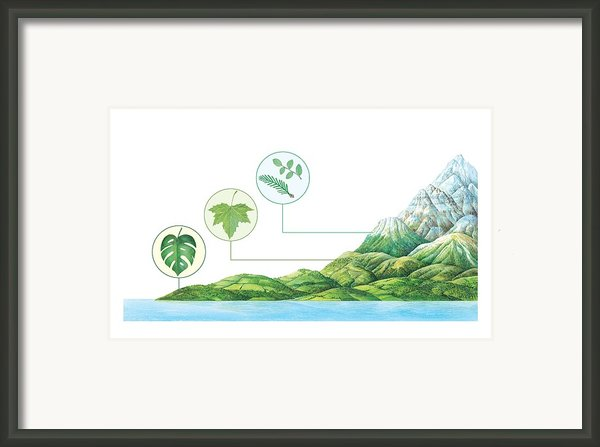 Plant Communities, Artwork Framed Print By Gary Hincks