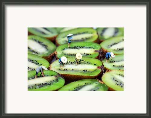 Planting Rice On Kiwifruit Framed Print By Paul Ge