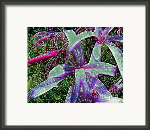 Plasticized Cape Lily Digital Art Framed Print By Merton Allen