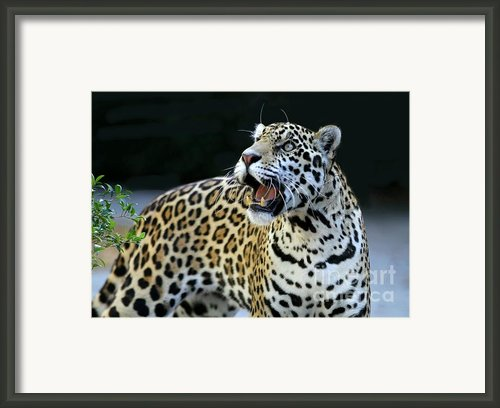 Play With Me Framed Print By Sabrina L Ryan