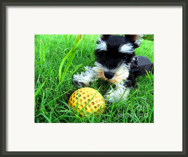 Playing In The Green Grass Framed Print By Tisha Mcgee