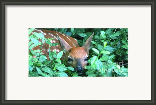 Playing Peekaboo Framed Print By Sandra Bronstein