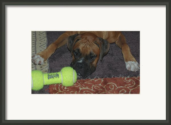 Please Play With Me Framed Print By Digiart Diaries By Vicky B Fuller