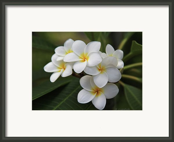 Plumeria - Golden Hearts Framed Print By Kerri Ligatich
