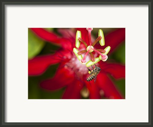 Pollen Collection Service Framed Print By Zoe Ferrie