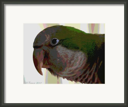 Polly Want A Cracker? Framed Print By Donna Frasca