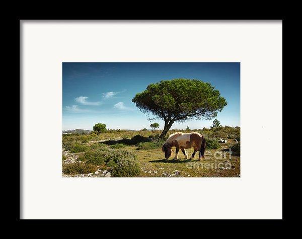 Pony Pasturing Framed Print By Carlos Caetano