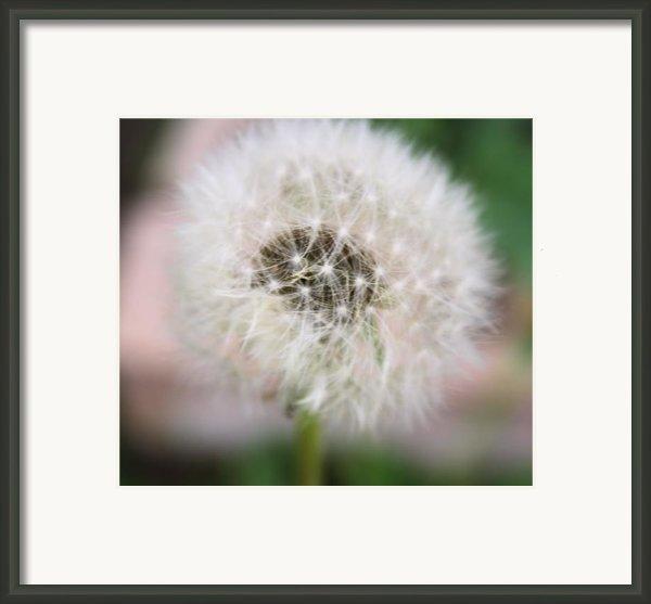 Poof Framed Print By Lynnette Johns