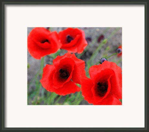 Poppies Of Stone Framed Print By Jerry Cordeiro