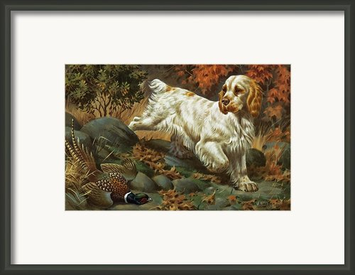Portrait Of A Clumber Spaniel Hunting Framed Print By Walter A. Weber