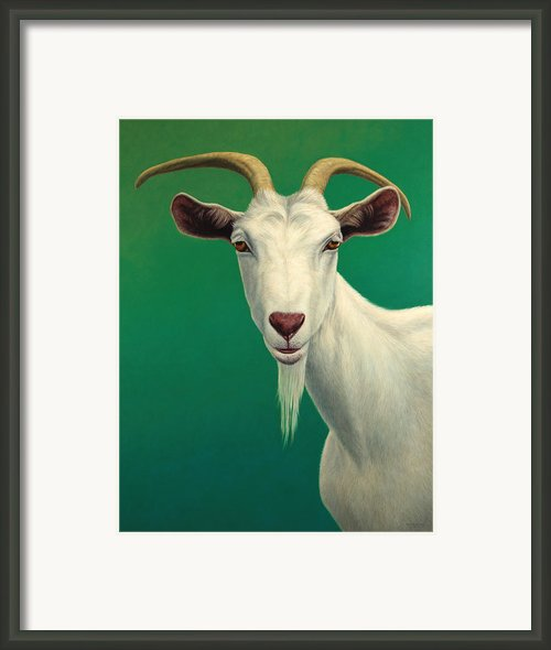 Portrait Of A Goat Framed Print By James W Johnson