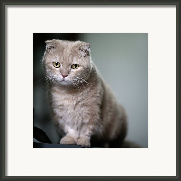 Portrait Of Cat Framed Print By Leoch Studio