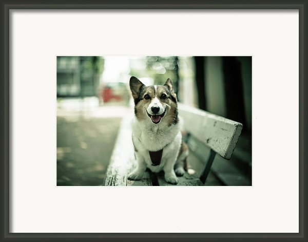 Portrait Of Dog Framed Print By Moaan