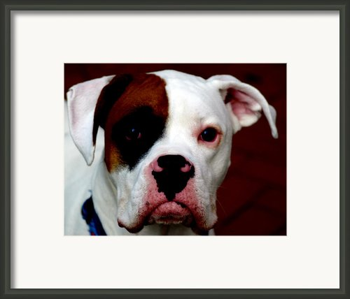 Portrait Of Her Best Friend  Framed Print By Steven  Digman