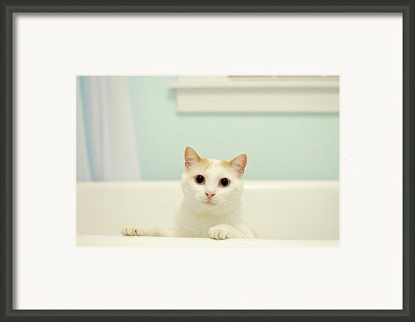 Portrait Of White Cat Framed Print By Melissa Ross