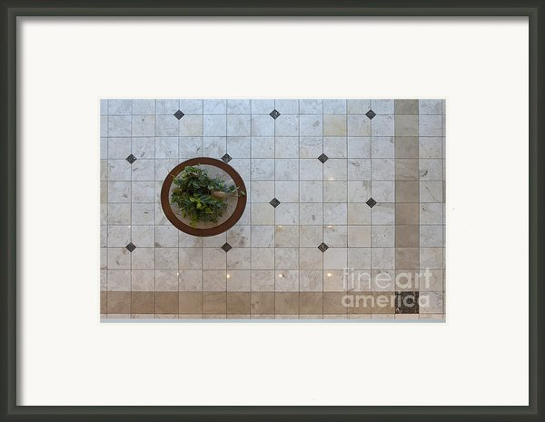 Potted Plant In Foyer Floor From Above Framed Print By Will & Deni Mcintyre