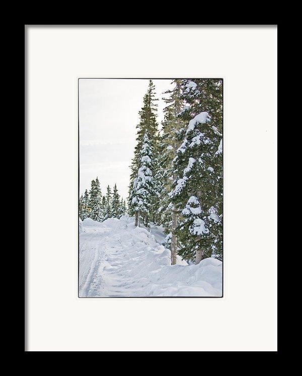 Powdery Snow Path Framed Print By Lisa  Spencer