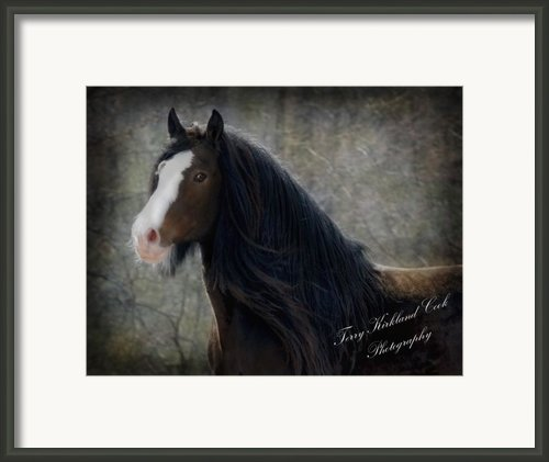 Powerful Paul Framed Print By Terry Kirkland Cook