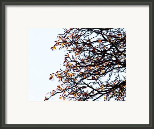 Praha Tangled Tree Framed Print By Shawn Wallwork