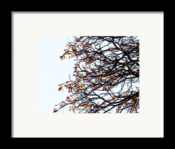 Praha Tangled Tree Framed Print By Shawn Wallwork