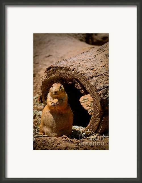 Prairie Dog Dining Al Fresco Framed Print By Shutter Happens Photography