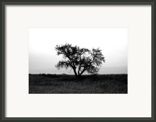 Prairie Dog Framed Print By Jerry Cordeiro