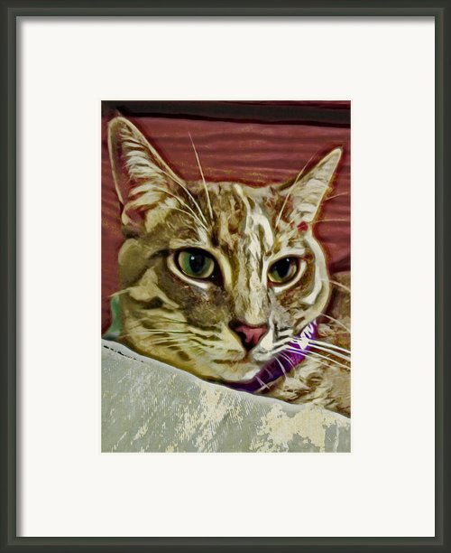 Pretty Kitty Framed Print By David G Paul