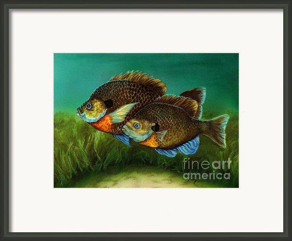 Pretty Little Panfish Framed Print By Kathleen Kelly Thompson