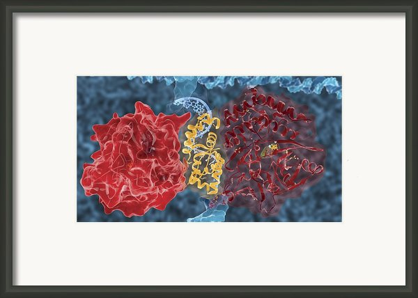 Preventing Bacterial Dormancy, Artwork Framed Print By Ramon Andrade 3dciencia