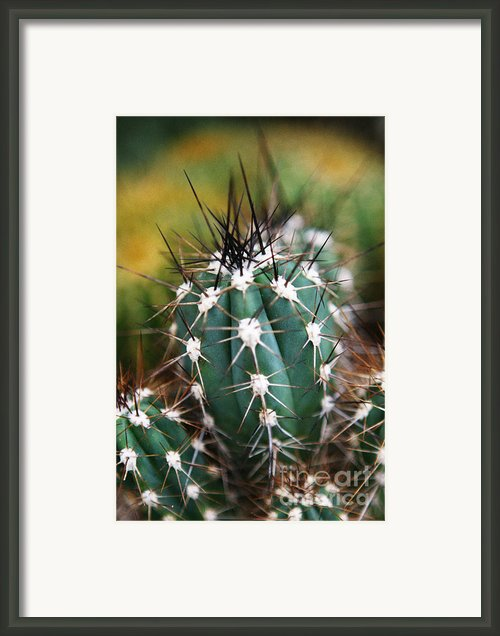Prickly  Framed Print By Leslie Leda