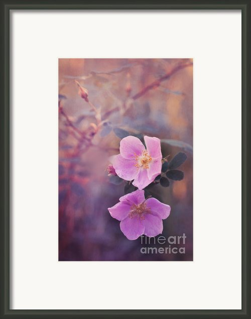 Prickly Rose Framed Print By Priska Wettstein