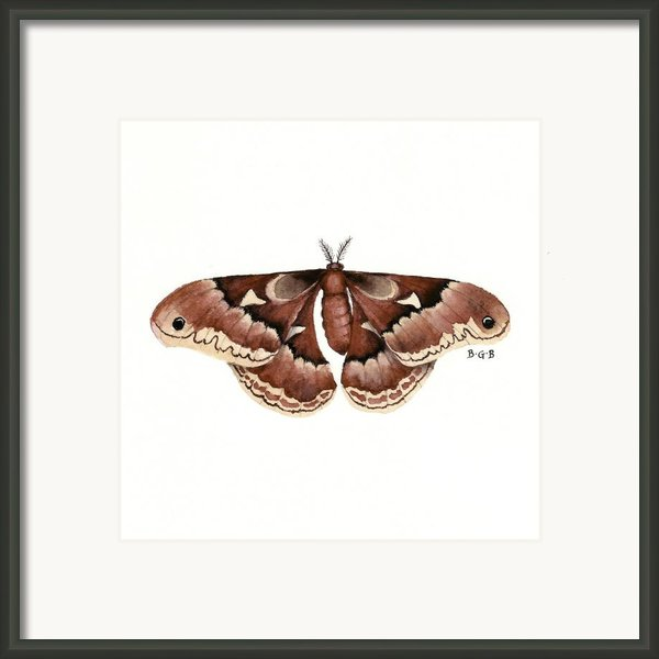 Promethea Moth Framed Print By Betsy Gray