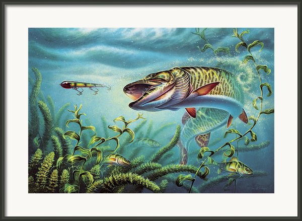 Provoked Musky Framed Print By Jon Q Wright