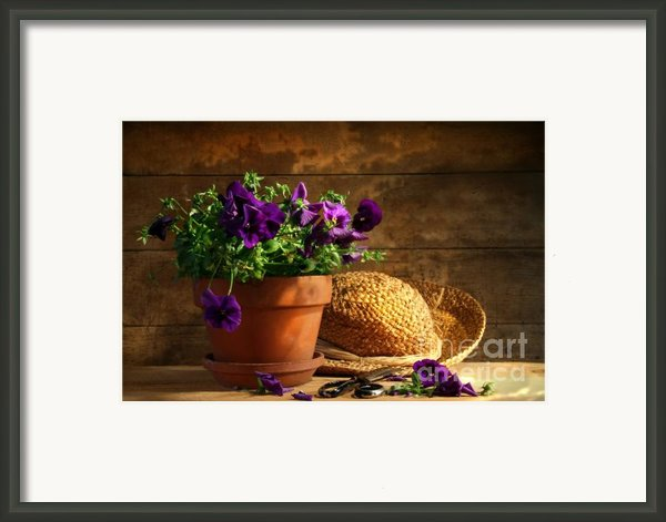 Pruning Purple Pansies Framed Print By Sandra Cunningham