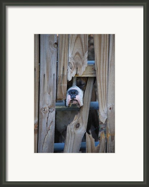 Psst Help Me Outta Here Framed Print By Digiart Diaries By Vicky Browning